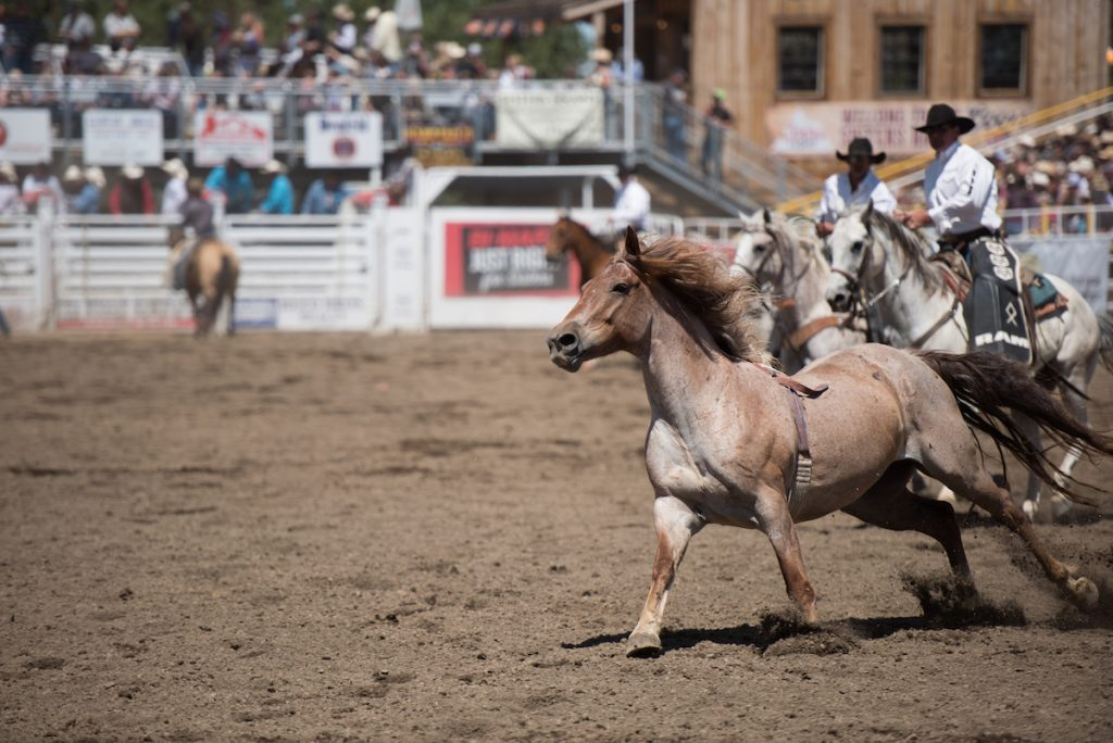 Sisters Rodeo 2016